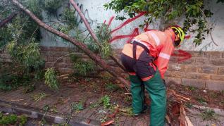 Un árbol cae sobre un vehículo en Jaca, a consecuencia de un rayo