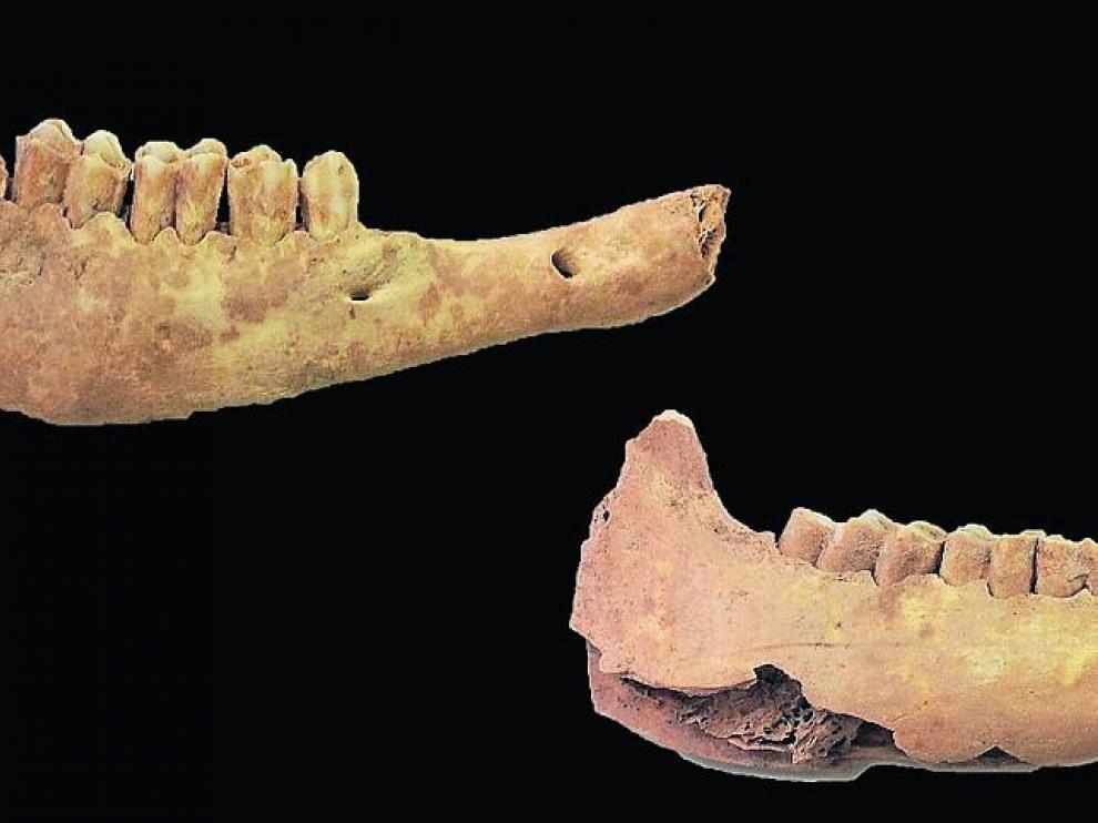 Mandíbulas de ovejas halladas en la Cueva de Chaves y estudiadas en la investigación.