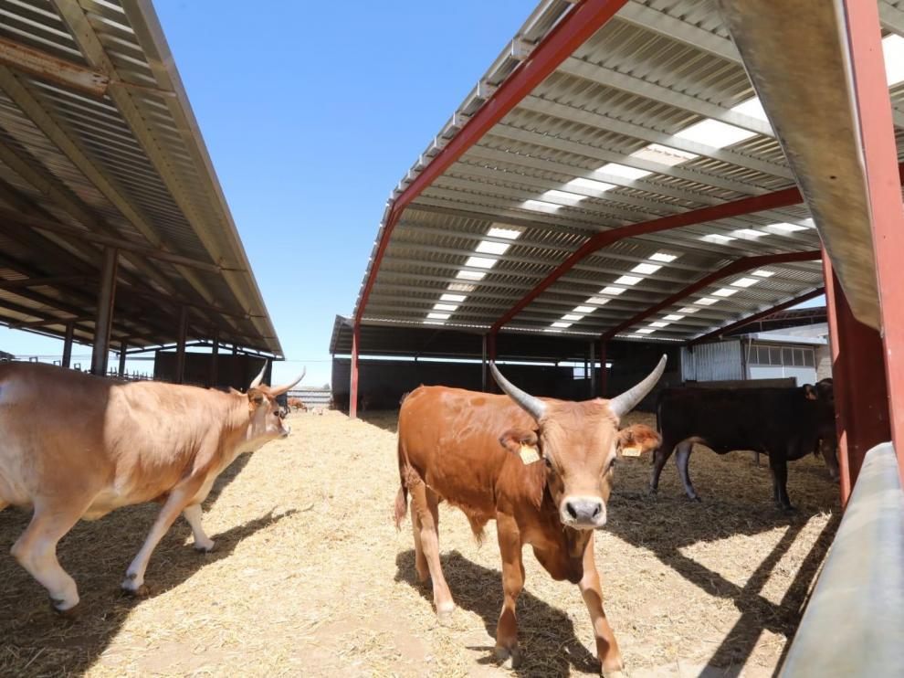La granja está situada a las afueras de Tardienta.