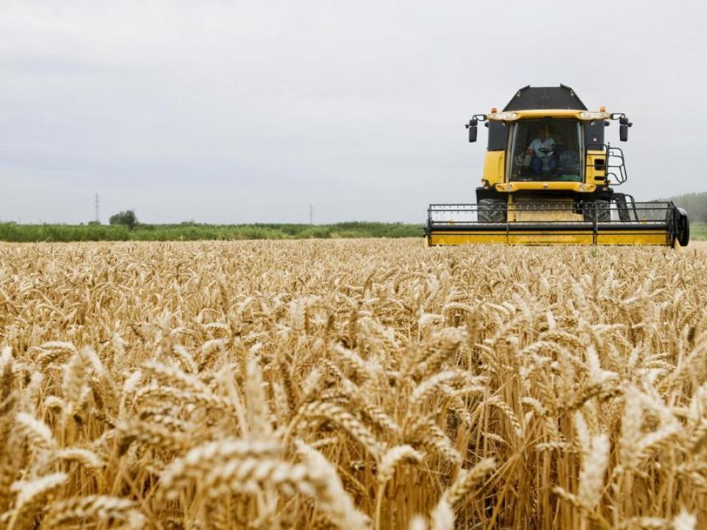 Trabajos de una cosechadora en un campo de cereal.