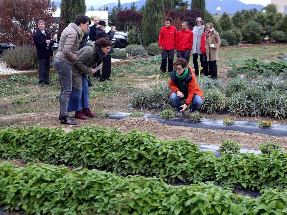 El Proyecto Spagyria avanza pese a la crisis sanitaria y la mala meteorología