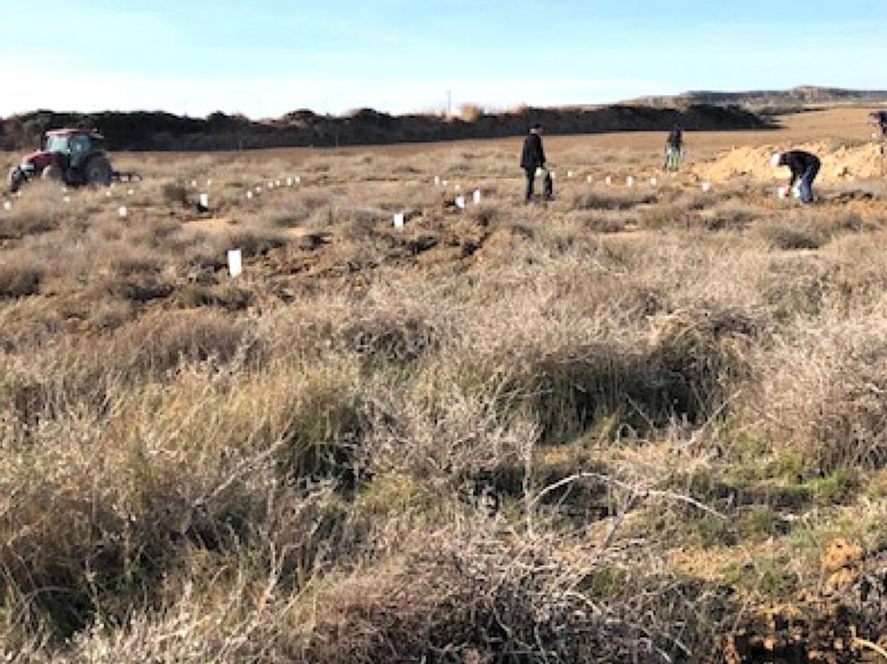 Comienza en Sangarrén un plan de reforestación