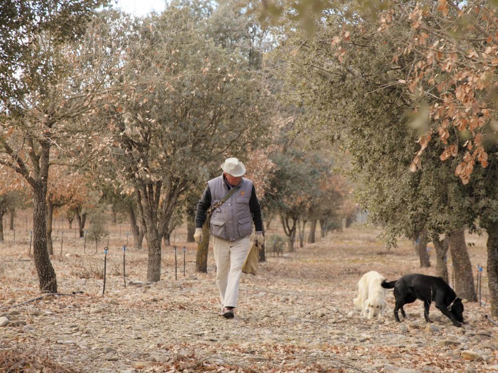 La DPH convoca ayudas por 250.000 euros para la trufa
