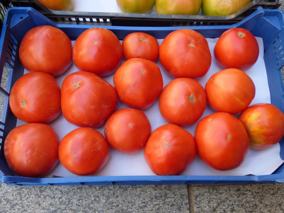 Marco Trade Revista ensalza en sus páginas las virtudes del Tomate Rosa de Barbastro