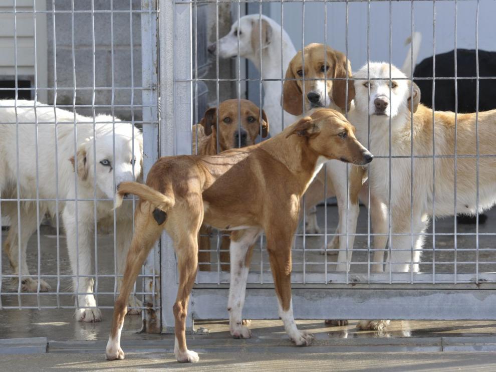 El centro de recogida de animales de la Diputación de Huesca supera las 350 adopciones