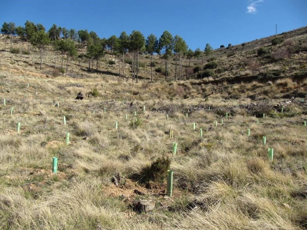 Docentes y alumnos de la Politécnica participan en un proyecto pionero de reforestación
