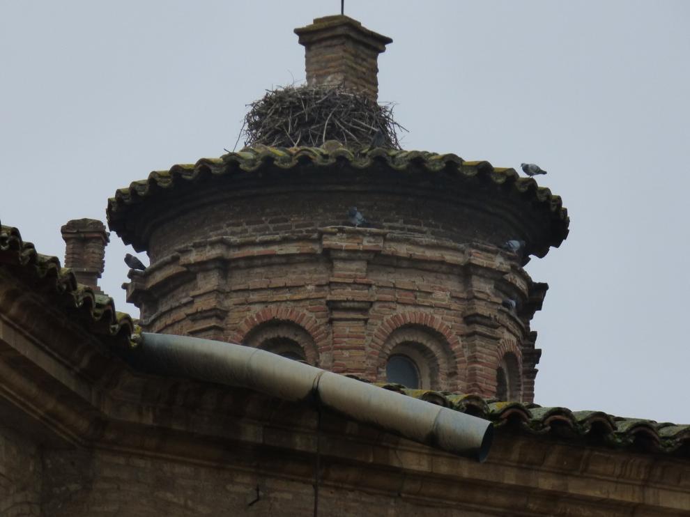 Eliminados cinco nidos de cigüeña de la catedral de Barbastro