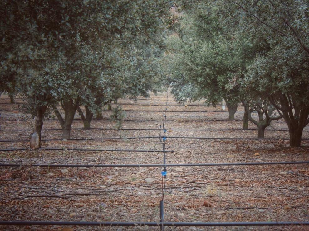 Aragotruf logra el primer sello de sostenibilidad agrosilvestre