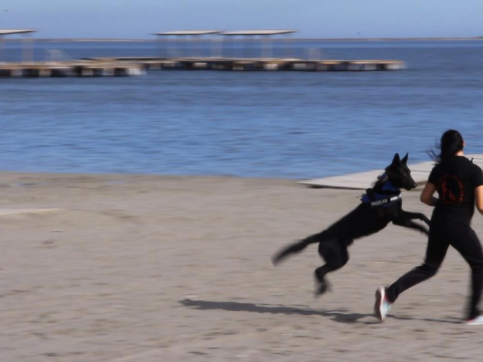 La terapia asistida con perros ayuda a las víctimas de maltrato