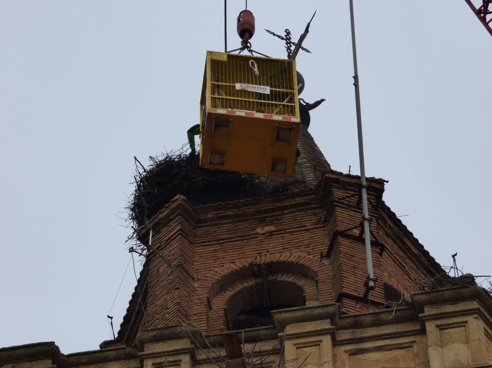 Se eliminan cuatro nidos de cigüeña en la torre de la catedral de Barbastro