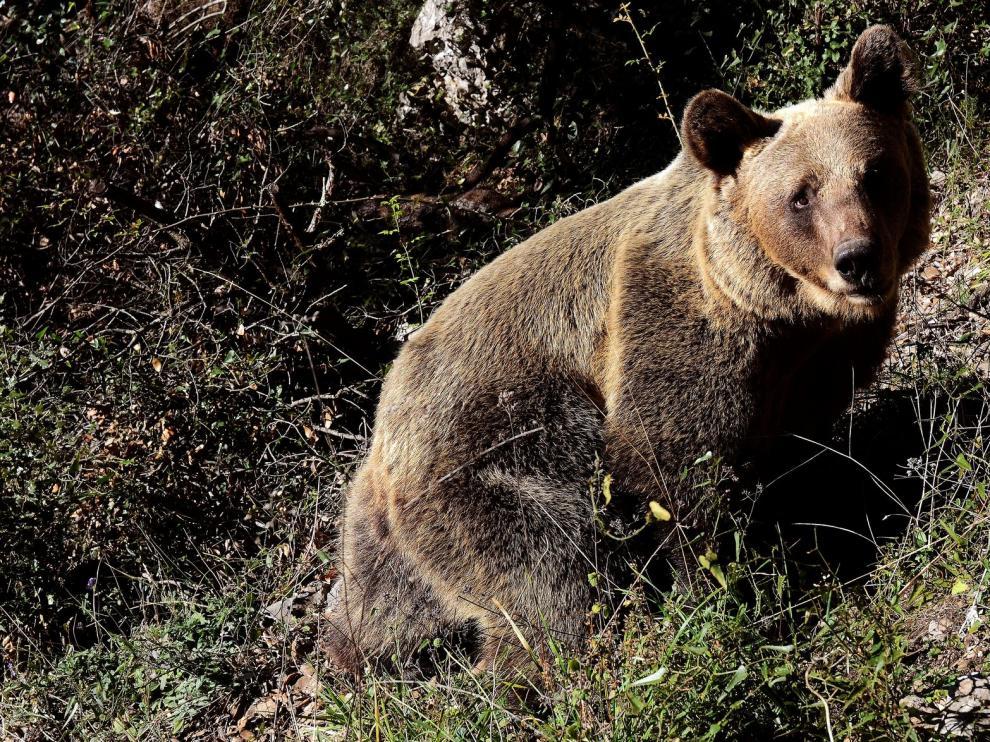 """Vincenzo Penteriani: """"Lograr la convivencia con oso y lobo es algo que compete a las instituciones"""""""