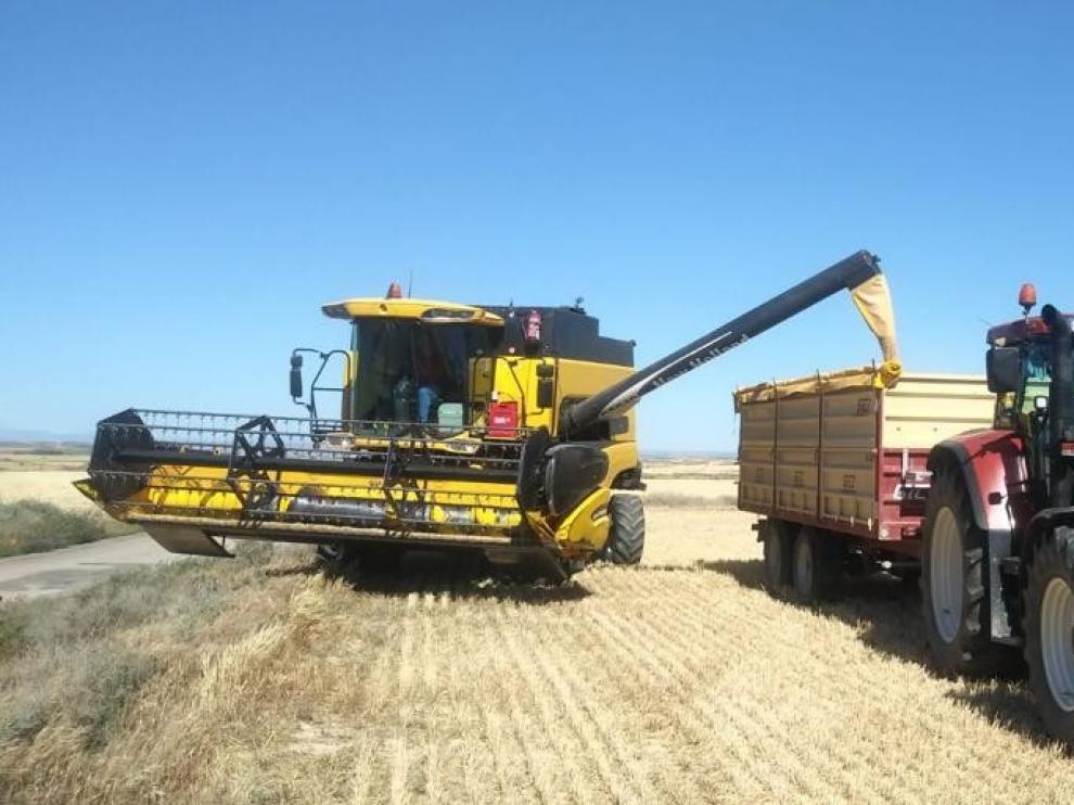 Las cosechadoras comienzan a entrar en campos de la zona sur
