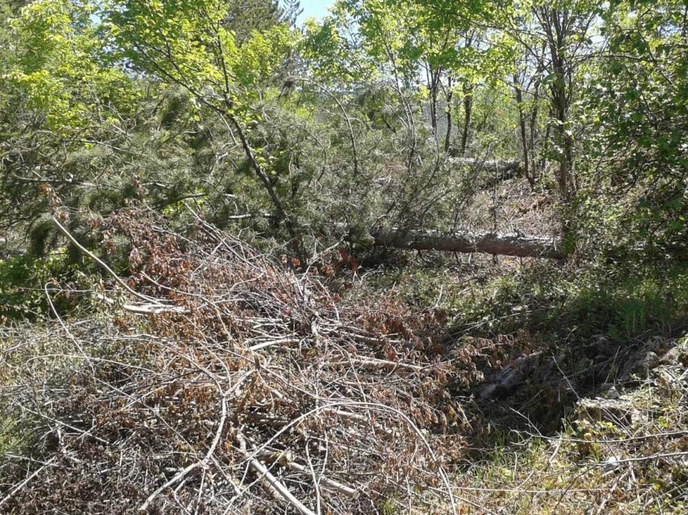 Denuncian una tala en el recién mejorado Camino de San Úrbez