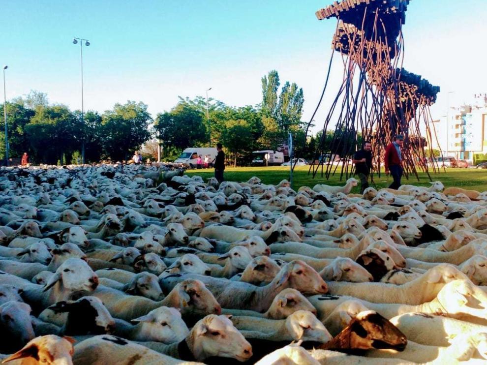 """Unas 1.200 ovejas se dirigen al ibón de Ip para """"veranear"""""""