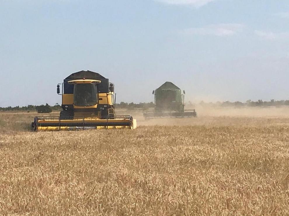 El Ministerio prevé un descenso del 19,5 % en la cosecha de cereal