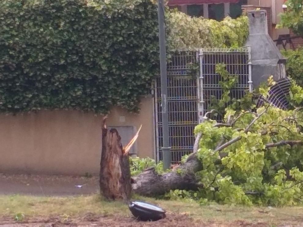 La tormenta deja varias ramas y árboles caídos en Barbastro