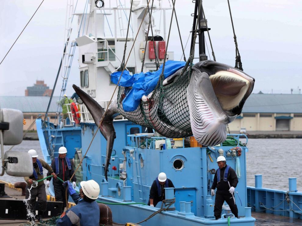 Japón reanuda su controvertida caza comercial de ballenas 31 años después