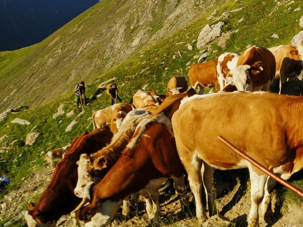 Las lluvias reverdecen el pasto para la ganadería extensiva