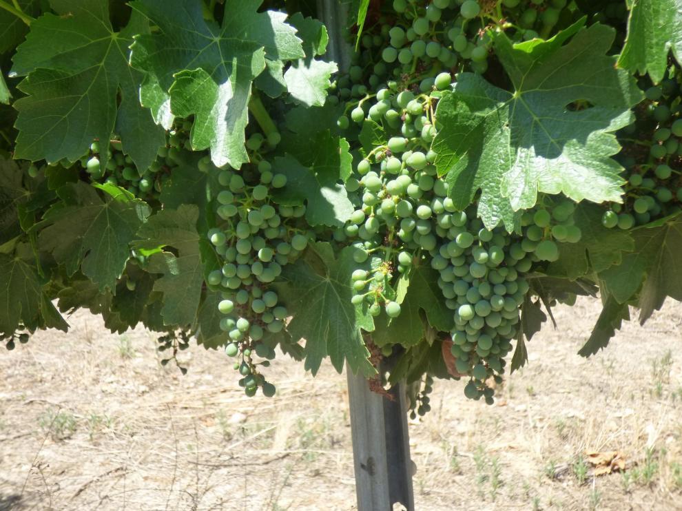 Barbastro celebra la XX edición del Festival del Vino del 1 al 4 de agosto