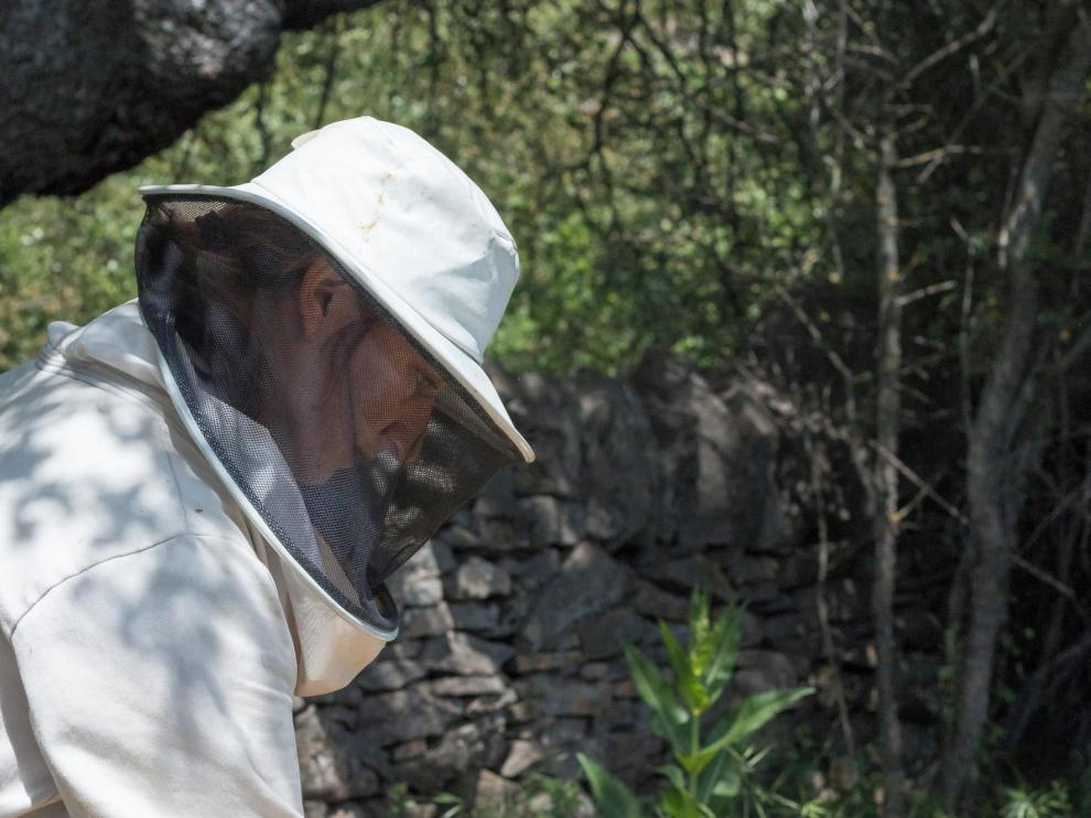 """""""A Redolada"""" da a conocer desde Artosilla el singular mundo de las abejas"""