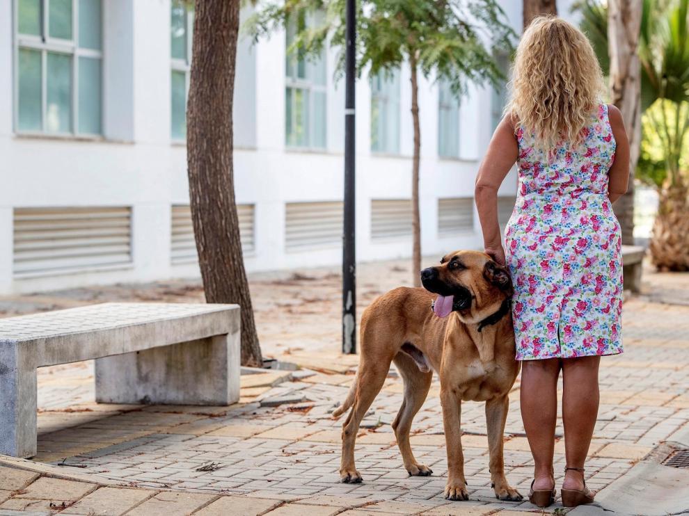 Perros, aliados terapéuticos de las víctimas de malos tratos