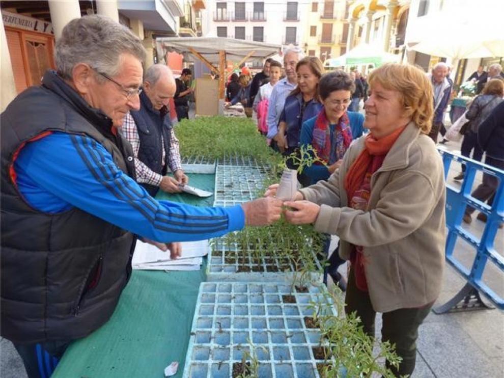 La Asociación de Hortelanos del Alto Aragón recibirá el Trofeo Ferma 2019