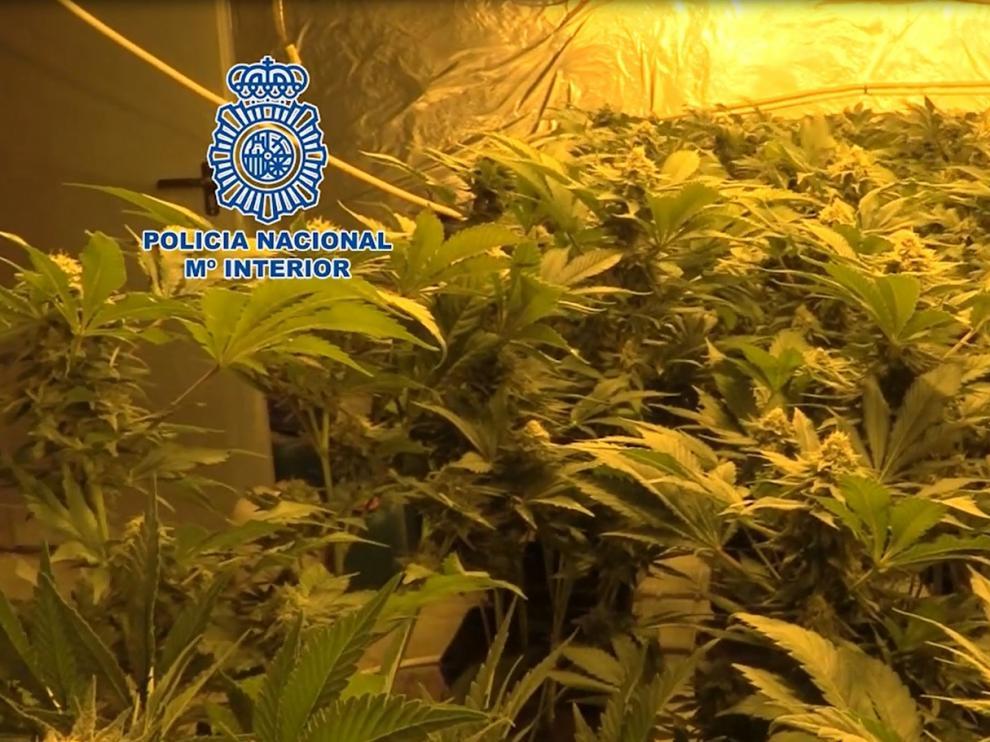 La Policía Nacional lidera la lucha internacional contra el cultivo y el tráfico ilícito de marihuana
