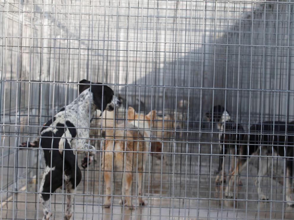 Casi 300.000 mascotas buscan un nuevo hogar en España