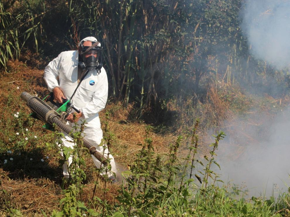 El mosquito tigre ha aumentado un 70% en España respecto al año pasado