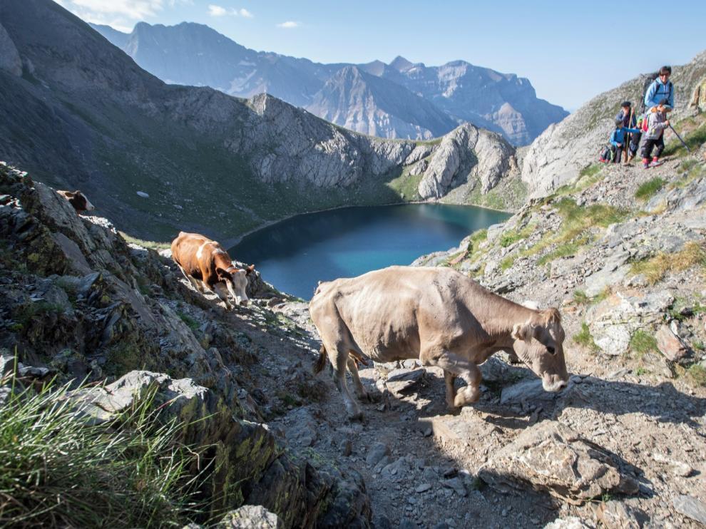 La trashumancia en los Pirineos, en un documental