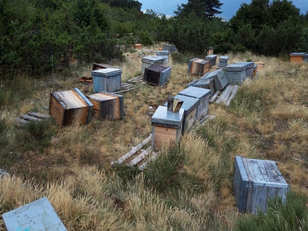 El segundo ataque del oso a un colmenar en Bisaurri deja daños en 21 colmenas