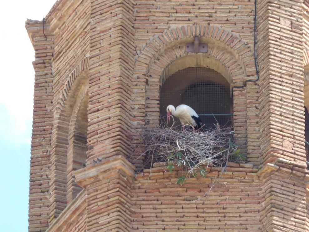 Autorizan retirar los tres nidos de cigüeña que quedan en la torre de la catedral de Barbastro