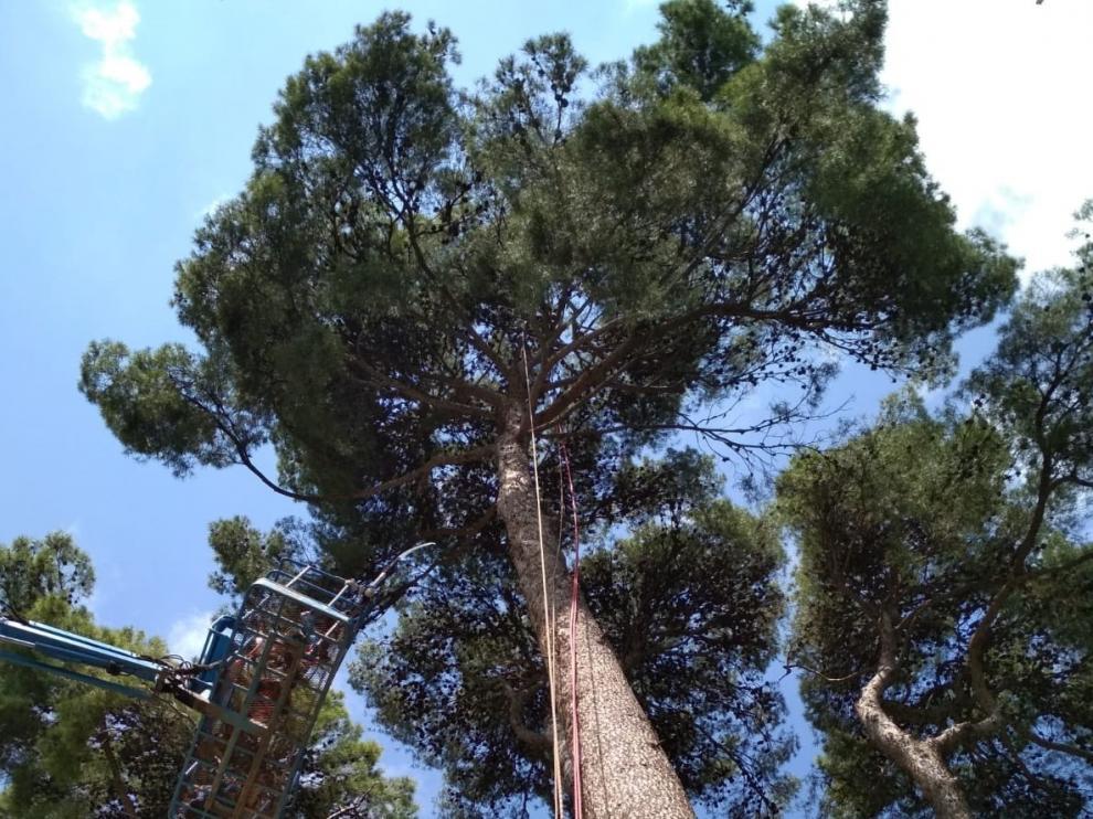 El Ayuntamiento de Huesca realiza un seguimiento de los cerca de 19.000 árboles de la ciudad