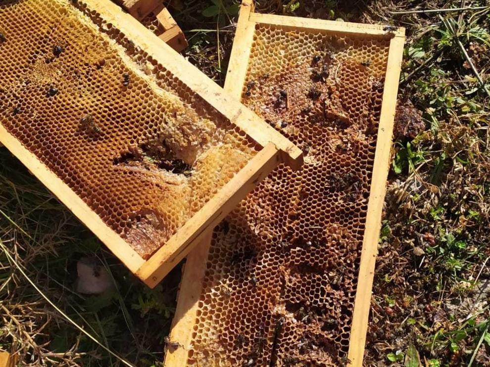 Las abejas siguen patrones matemáticos para fabricar sus panales