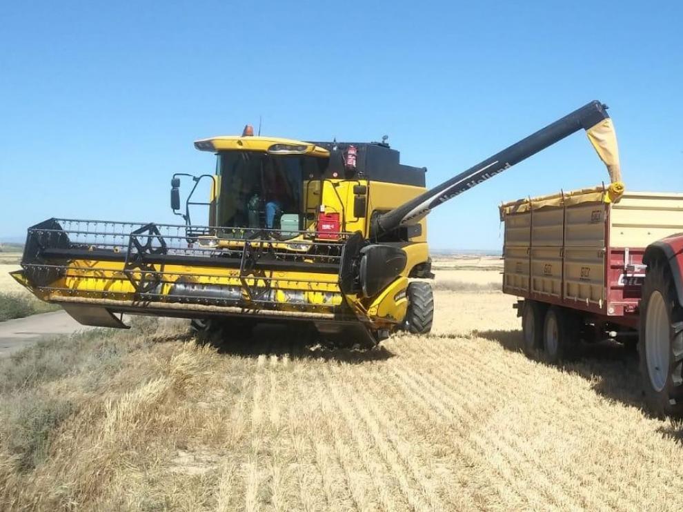 El fin de la cosecha confirma la caída de la producción de cereal