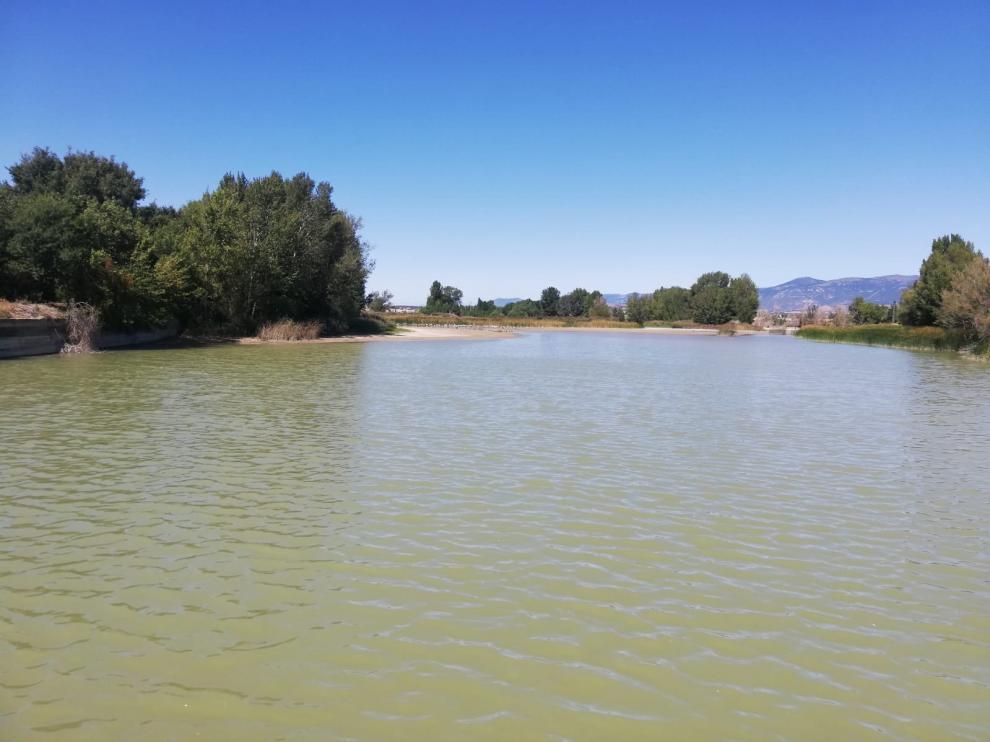 La sequía se cebó con los peces de mayor tamaño de la alberca de Cortés