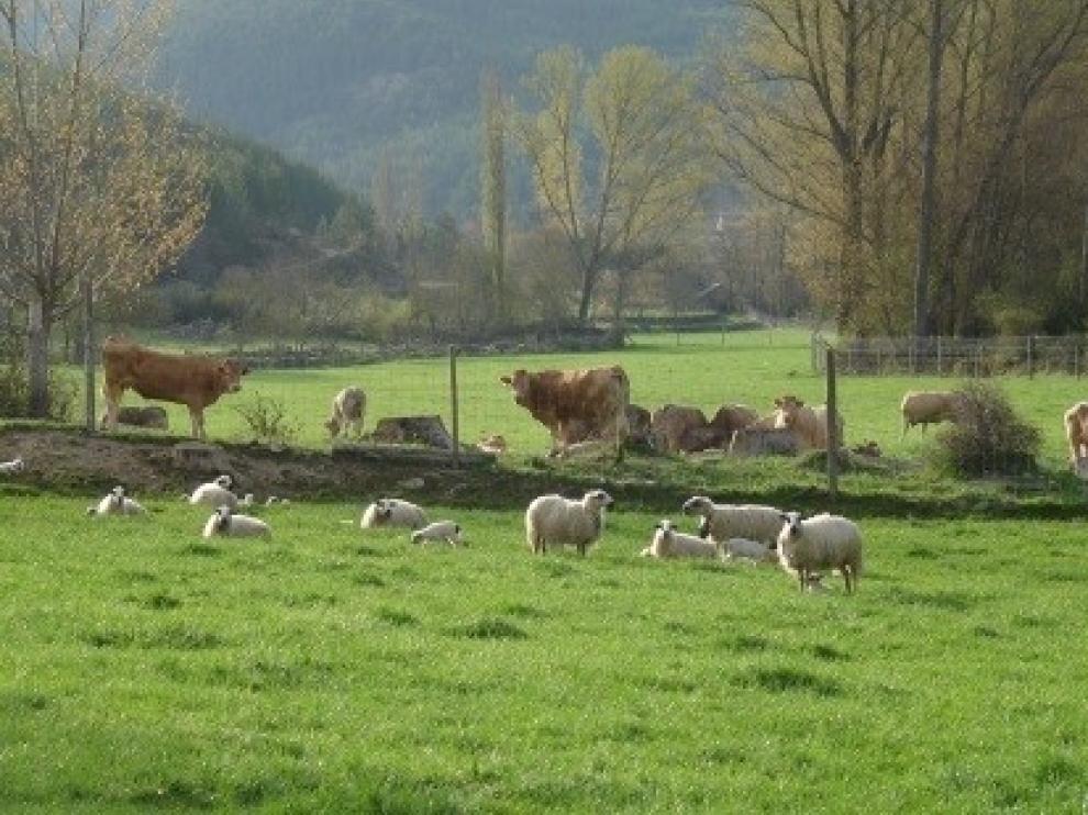 Convenio para mejorar el desarrollo de los terneros en explotaciones de vacuno de carne
