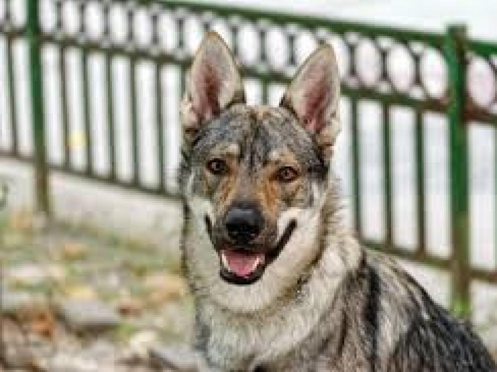 Kira y Thor, los nombres para perros más elegidos en 2019