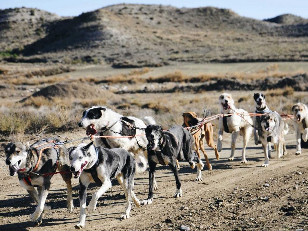 Los perros de tiro vuelven a tomar los paisajes monegrinos