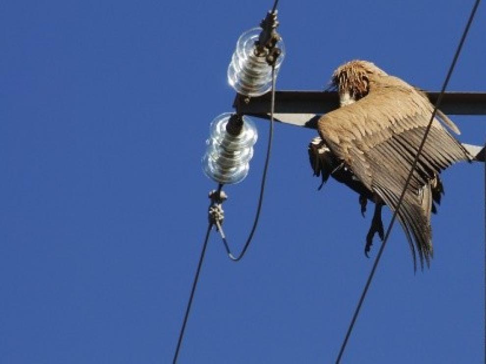 La CHE adaptará 130 líneas eléctricas para proteger a las aves en Aragón y La Mancha