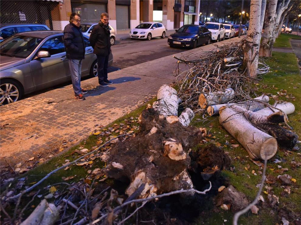 Rachas de viento de hasta 42 kilómetros por hora derriban varios árboles en Huesca