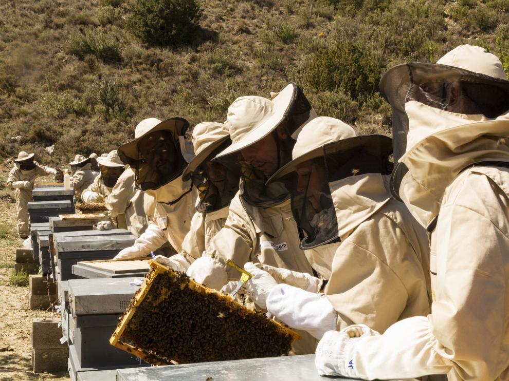Uaga Coag denuncia el uso de importaciones de miel de baja calidad para distorsionar el mercado
