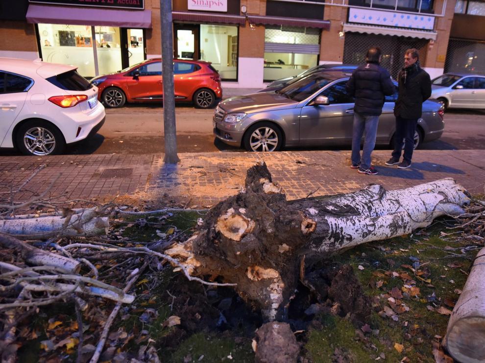 Caída de árboles por el viento