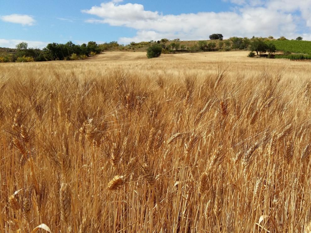 La renta agraria cae un 8,6% en 2019, hasta los 26.179,6 millones