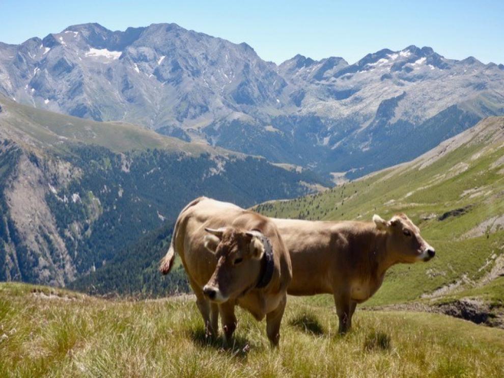 Chistau Natural, ejemplo de desarrollo en ganado extensivo
