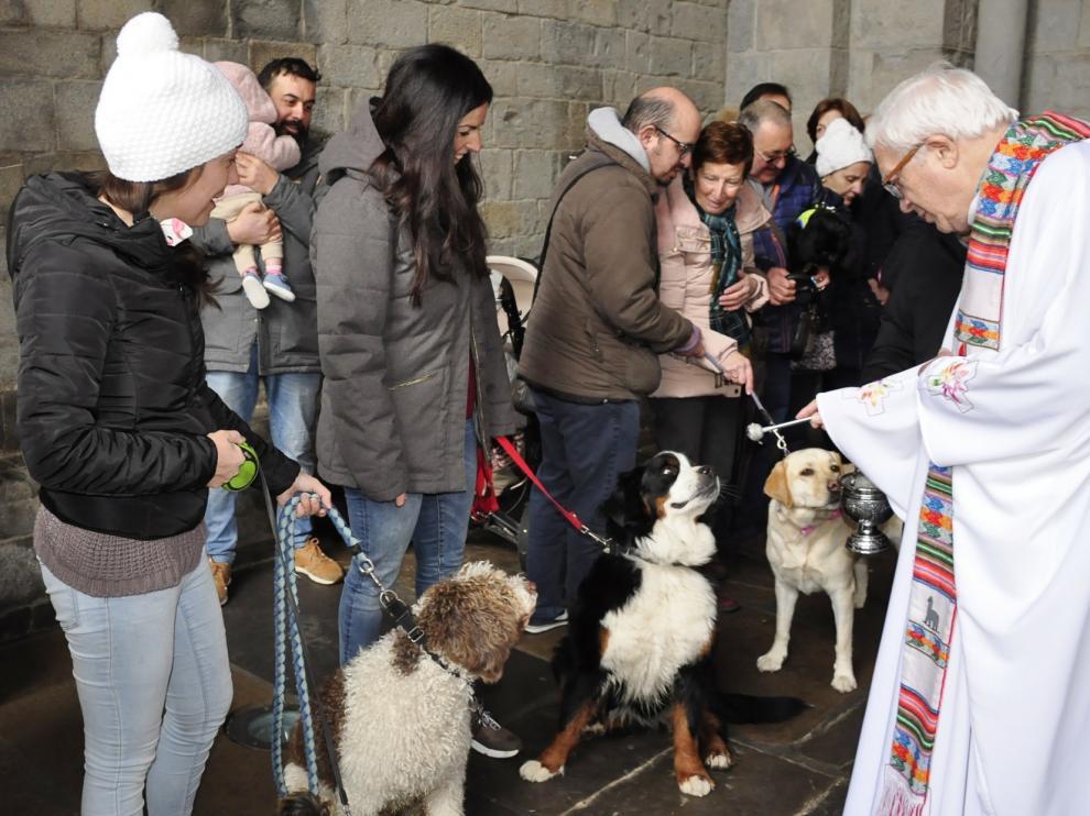 Los animales protagonizan la festividad de San Antón