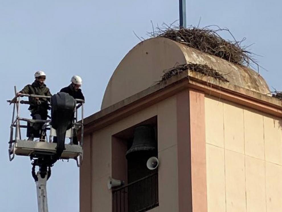 Retiran nidos de cigüeñas de una torre de Sariñena y un árbol de Cartuja de Monegros