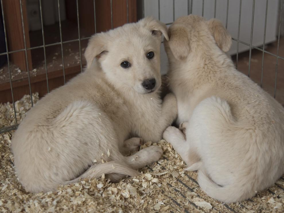 Más de 350 perros del centro de recogida de animales de la DPH encontraron un hogar en 2019