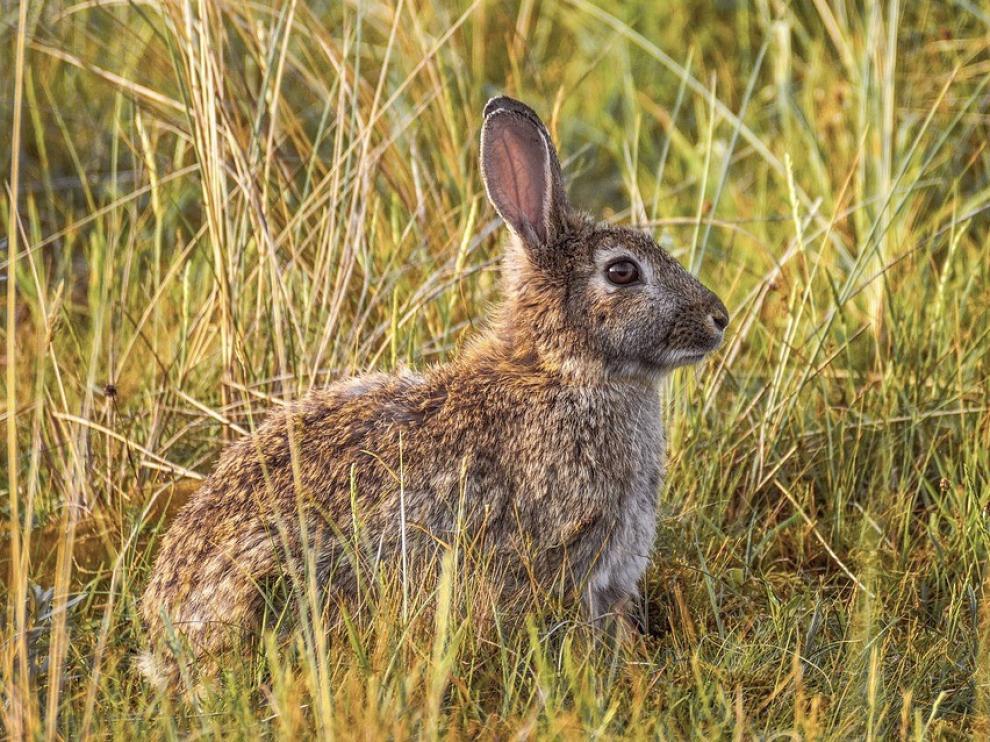 Aragón autoriza la caza para el control de especies dañinas