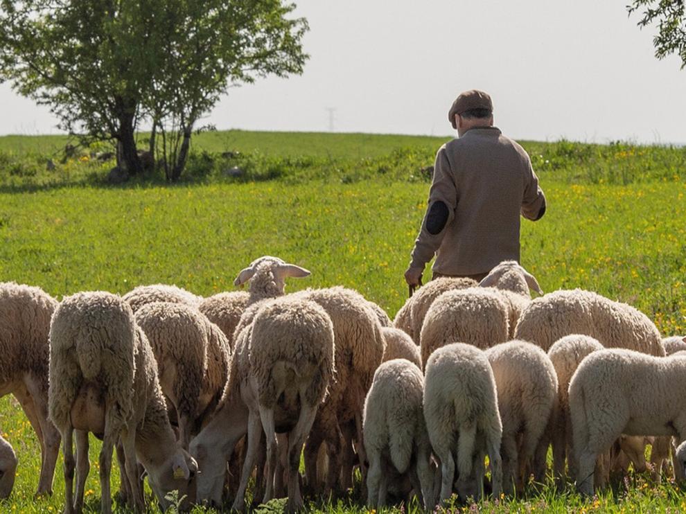 Propuestas para aliviar el impacto del coronavirus en ovino-caprino